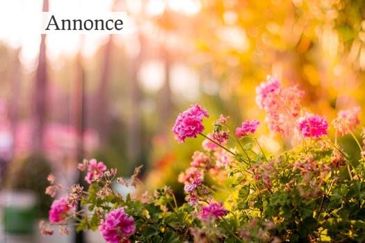 Gør haven forårsklar med granit