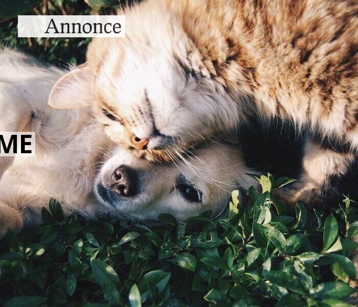 Indret dit hjem på dit kæledyrs præmisser